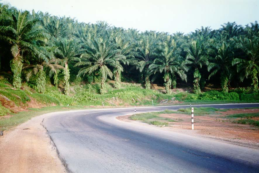 Malaysia: Oil Palm and Rubber
