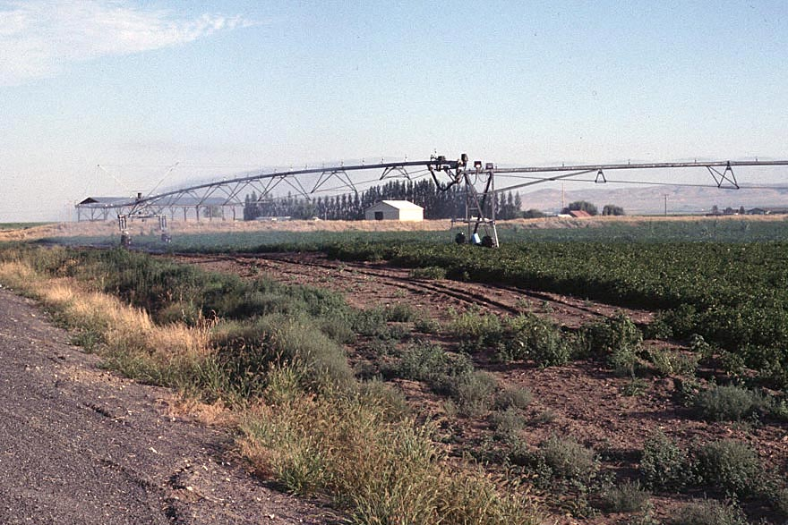 The Western United States: Bonanza Farming in the Columbia Basin